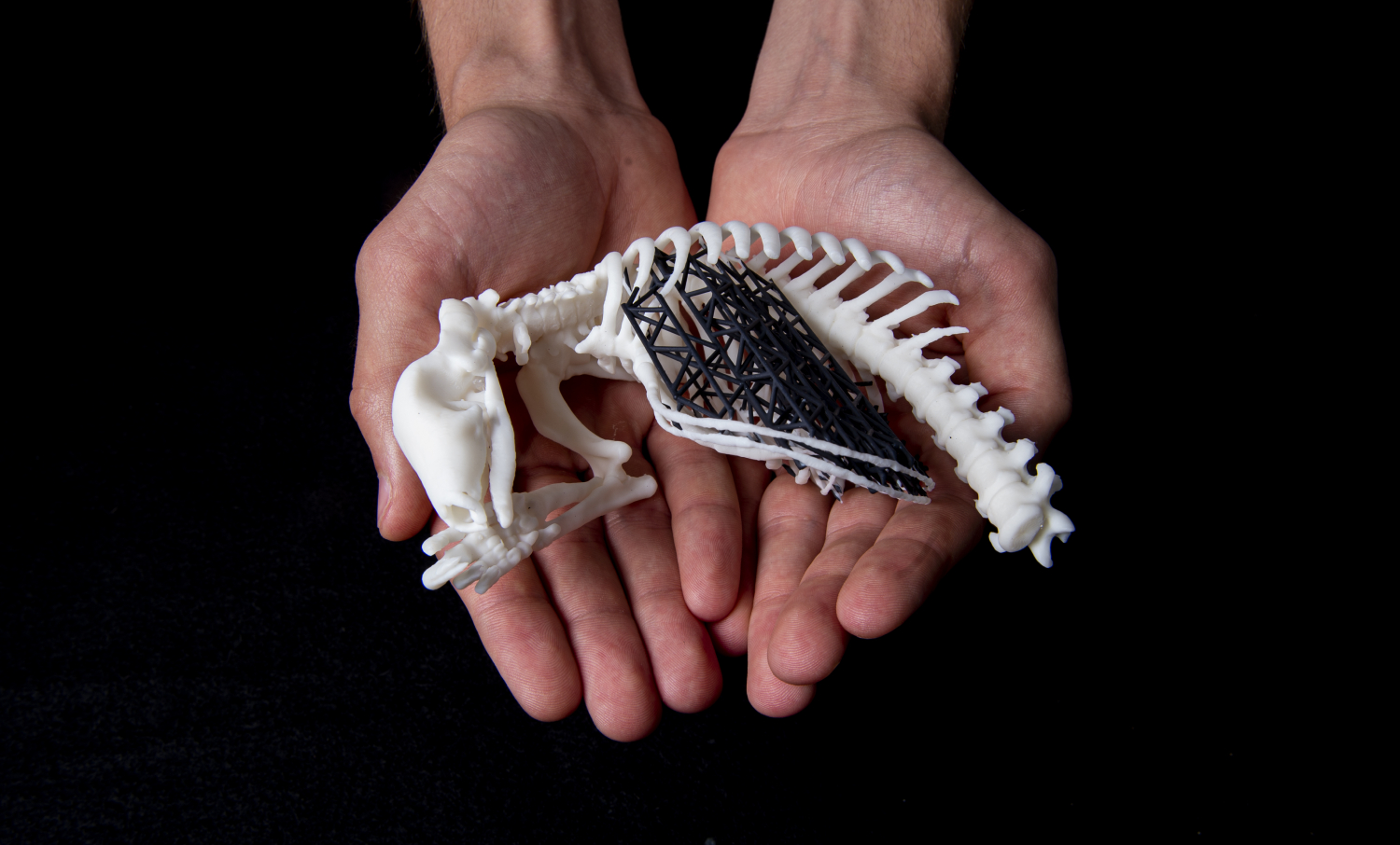 Verhulst holds a 3D rendering of a partial pangolin skeleton.